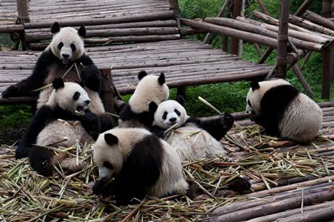 Day 12 - Chengdu 25