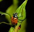 Oh! Ladybugs (1 of 1)
