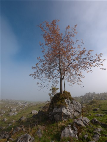 Stone with tree on top