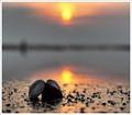 """""""Sun shells"""""""