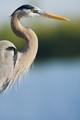 large aperture heron