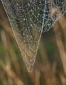 Prismatic Web