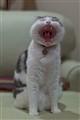 Yawn!