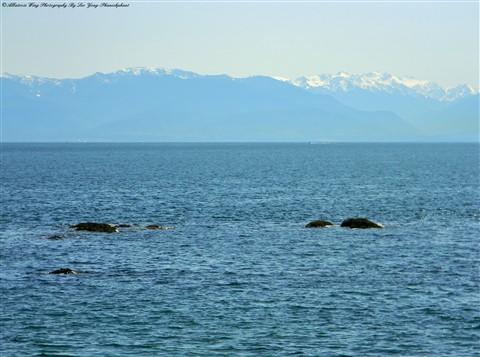 Olympic Mountains Across The Juan De Fuca Strait