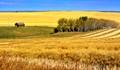Autumn Hay Fields, Nr.Innisfail, Alberta, Canada.