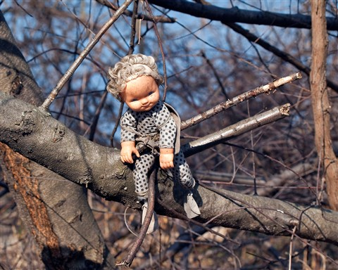 Doll in Woods