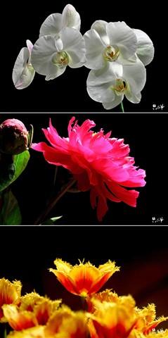 flowersonblack