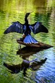 Black and Blue Bird on Stump in Water