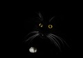 the portrait of a black cat in the dark room