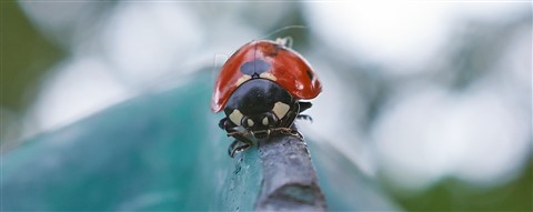 Ladybug on a fence post tip