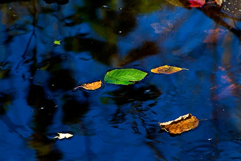 Leaves in Stream PWL