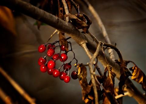 _B075367 5x7 berries orton effect