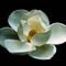 Magnolia Proper 16x20sm