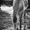 horse_IMG_1735