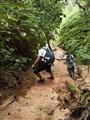 Angsi climbers