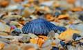 shellscloser