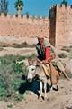 Moroccan & Mule