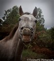 A happy horse
