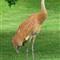 Friendly Crane