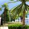 Lakeside palm trees