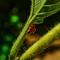 Ladybug-2-Web