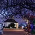TX Winter