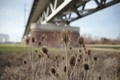 Riedbahnbridge