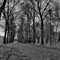 xdp-vialetto-5468_6_7-bw