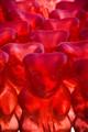 Yummy Gummy Bears