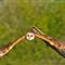 DGB_7717_Barn Owl