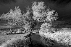 Bishop Creek IR-5321