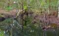 creekchallenge