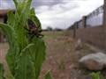 EC_Beetle