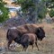 yellowstone_Sep242015_2801