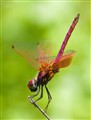 Dragonfly_01