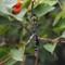 iso4ooo em5 Sigma 150mm macro dragonfly