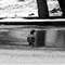 Pigeon on Frozen Pool-2