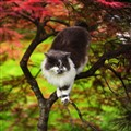cat on a beautiful tree