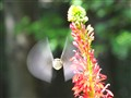 Hummingbird Rocket