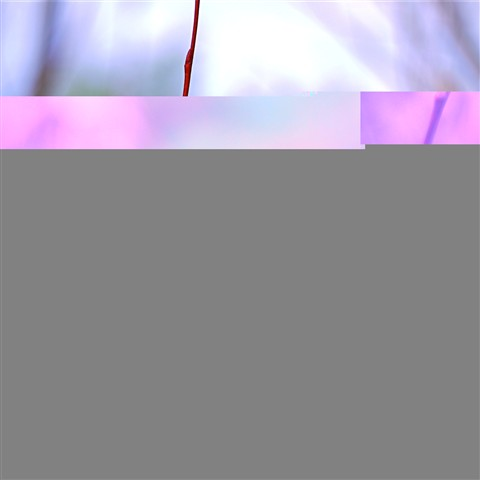 Zman53_2010-02-12
