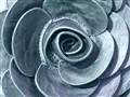 leer- rose- Inge