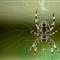 Cross-spider