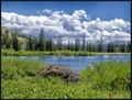 Beautiful Day at the Lake