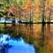 12 06 03, , MDSP, late autumn, REG, Canon 300D (2)