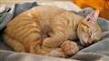 simba sleeping3