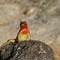 Gal Day 2 Espanola   _4230859: OLYMPUS DIGITAL CAMERA