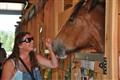 Fall Festival Horse