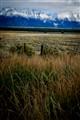 Grasslands and the Tetons