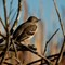 New bird 2