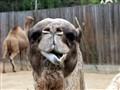 ex!!!! camel expression